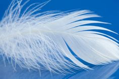 white bird feather macro view photo chicken plumage texture pattern