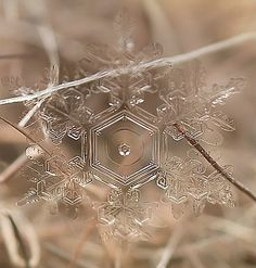 Beautiful photos of real snowflakes captured using macro lens by Russian photographer Andrey Osokin. Scientists have tried to replicate the process of snowflake formation. To the date of my information, they still haven't been able to get the water to freeze in the hexagonal formation of natural snowflakes.