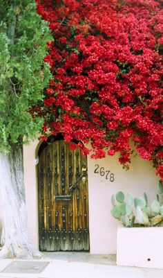 Door with bougainvillea in Los Angeles