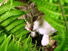Cat among the leaves