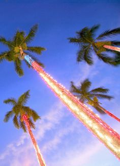 1. >>YAY to pre-decorated trees Hawaiin style!  >>NAY to neighborhood light show competitions with the Griswalds!