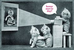 Vintage Dressed Cats Watching Slide Show, Harry Frees I Love Cats, Cute Cats, Funny Cats, Old Cats, Cats And Kittens, Owning A Cat, Curious Cat, Vintage Cat, Beautiful Cats