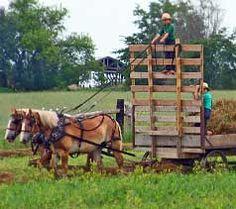 ~  Amish Children ~ Sarah's Country Kitchen ~