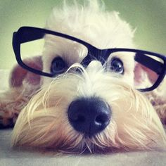 Even dogs look smarter in glasses.