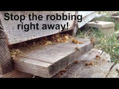 ▶ Honey Bees Robbing A Hive - YouTube