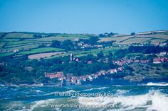 Whitby Photography - Glenn Kilpatrick - Seals On The Yorkshire Coast