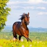 4 Tips for Keeping Your Horse Healthy This Summer 22/06/2014 PRE for Sale Articles, Horse tips and tricks Horse tips, Summer health Edit