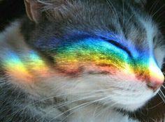 I love cats so much I Love Cats, Crazy Cats, Cute Cats, Funny Cats, Cat Aesthetic, Rainbow Aesthetic, Cute Baby Animals, Funny Animals, Kittens Cutest