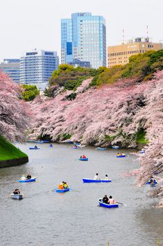Japan's Cherry Blossom Festival, or Hanami, takes place from March to May.