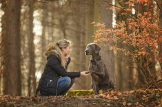 Hundeshooting im Wald von Geretsried mit Blauem Weimaraner