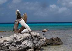The ABCs of Bonaire Via www.reeftraveler.com
