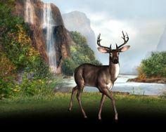 Deer by falls