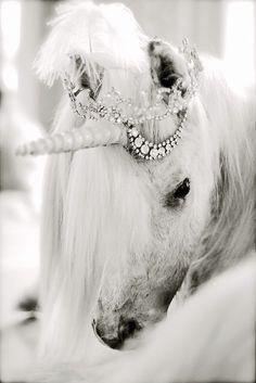 bring me a unicorn please please please