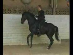 Nevzorov Haute Ecole - WOW  Absolutely AMAZING!!!  And all without a bridle!!!!!