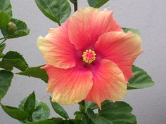 Flowers at Anagha Agile Systems Terrace Garden.