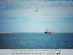 The Great Pumpkin fishing shipping. Cape Cod Massachusetts. #chatham #capecod #massachusetts