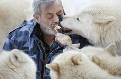 Werner Freund Wolf Man >> Lives with 29 wolves at Wolfspark Werner Freund in Merzig, Germany.
