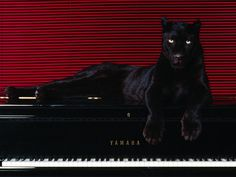 """""""Cat's In The Cradle"""" ... now!"""" exclaimed Patience the Panther."""
