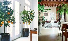 lovers of mint: Nouvelle tendance déco : Les plantes oversize Deco Boheme, Blog Deco, Balconies, Urban, Lifestyle, Decoration, Home Decor, Container Gardening, New Fashion