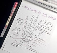 Anatomy of the hand - Studying Motivation Nursing School Notes, College Notes, Science Notes, Study Organization, School Study Tips, Pretty Notes, Study Hard, Study Inspiration, Study Notes