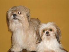 Mis hijos perruños