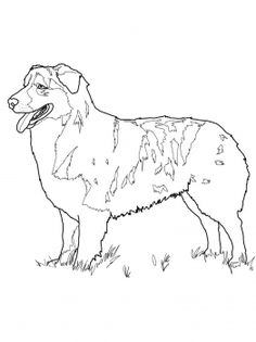 dog color pages printable | Australian Shepherd coloring page | Super Coloring