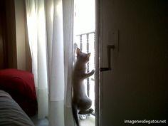 Gato - espía.