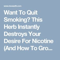 Want To Quit Smoking? This Herb Instantly Destroys Your Desire For Nicotine (And How To Grow It) - RiseEarth