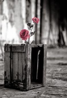 #pink  ❉ღϠ₡ღ✻↞❁✦彡●⊱❊⊰✦❁ ڿڰۣ❁ ℓα-ℓα-ℓα вσηηє νιє ♡༺✿༻♡·✳︎· ❀‿ ❀ ·✳︎· FR Sep 16, 2016 ✨ gυяυ ✤ॐ ✧⚜✧ ❦♥⭐♢∘❃♦♡❊ нανє α ηι¢є ∂αу ❊ღ༺✿༻✨♥♫ ~*~ ♪ ♥✫❁✦⊱❊⊰●彡✦❁↠ ஜℓvஜ
