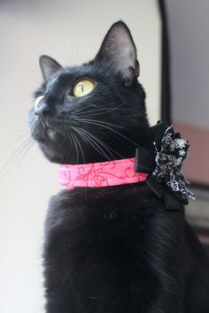 Black Fabric Flower with Pink Cat Collar for Party