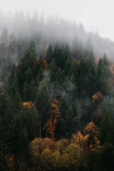 Photo The Effective Pictures We Offer You About Oregon forest A quality picture can tell you many things. You can find the most beautiful pictures that can be presented to you about Oregon trail in th Oregon Forest, Oregon Trail, Portland Oregon, Beautiful World, Beautiful Places, Adventure Is Out There, The Great Outdoors, Mother Nature, Mists