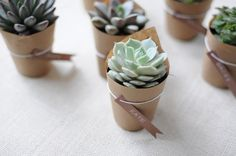 succulent . wedding . favor These are great! Almost anyone can keep these plants alive