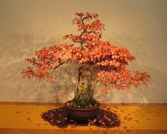 Bonsai (Japan)