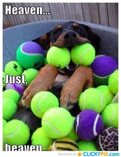 22 Cute Dogs With Balls