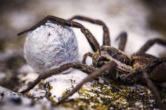 #spider #vsco #animals #macro #travel #nationalgeographic #natgeoinsects