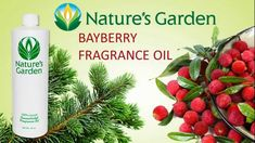 Bayberry Fragrance Oil - Natures Garden