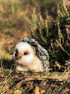 Needle felted hedgehog OOAK hedgehog Cute hedgehog figurine image 0 Cute Hedgehog, Make Time, Gift For Lover, Needle Felting, Whimsical, Sculpture, Autumn, Nature, Gift Ideas