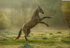 CELEBRATING THE NEW DAY Equine photography by Ekaterina Druz
