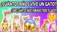 9 Ideas De Gatos Gatos Imagenes De La Selva Lenguaje De Los Gatos