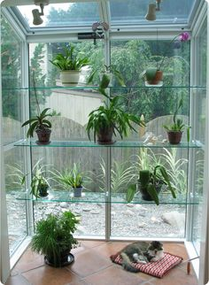 Garden Windows, Or Greenhouse Windows, Project Outward From The Existing  Structure To Create A Shelf Or Set Of Shelves Commonly Used To House Plants.