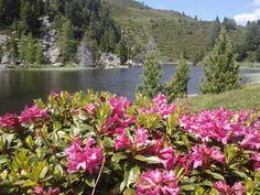 Almrausch im Biosphärenpark Nockberge Wonderful Places, Lakes, Austria, Mountains, Nature, Travel, Europe, Naturaleza, Viajes