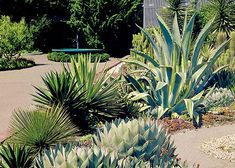 Everybody loves sunny weather--until our gardens start dying because there's no rain. Unless you can seed the clouds, it's wise to plan--and plant--for drought and dry spells. Click through for water-wise tips.