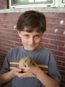 Pet prairie dog. Happiness provided by The Animal Store. #pets #animals