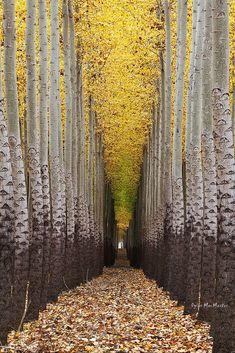Walking towards the light.... | Flickr - Photo Sharing!