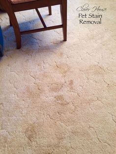 Get rid of pet stains from your carpet with these great tips!