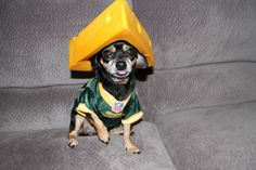 63 Best Cheeseheads Images Go Packers Packers Baby