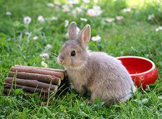 Animal Room, Rabbit, Bunny, Tricks, Animals, Rabbit Accessories, Rabbit Toys, Dwarf Rabbit, Animal Shelter