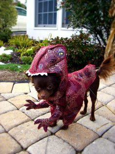 Dog Halloween Costume Contest: Charly the Raptor