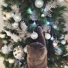 Image about cat in We Wish You a Merry Christmas and Happy New Year by Earl Grey ☕ Merry Little Christmas, Noel Christmas, Christmas Animals, Christmas Cats, Winter Christmas, All Things Christmas, Xmas, Christmas Tumblr, Christmas Aesthetic