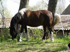 stáj Podkova   koně Draft Horses, Animals, Animales, Animaux, Animal, Animais